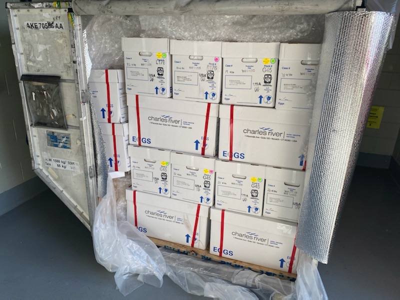 The ARK at JFK Now Shipping Medical Eggs for the Development of the Flu Vaccine