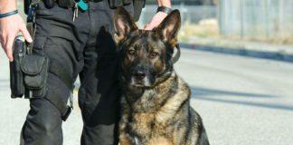 JFK Canine Unit