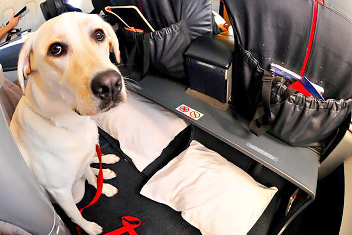 new rules makes pet travel more difficult